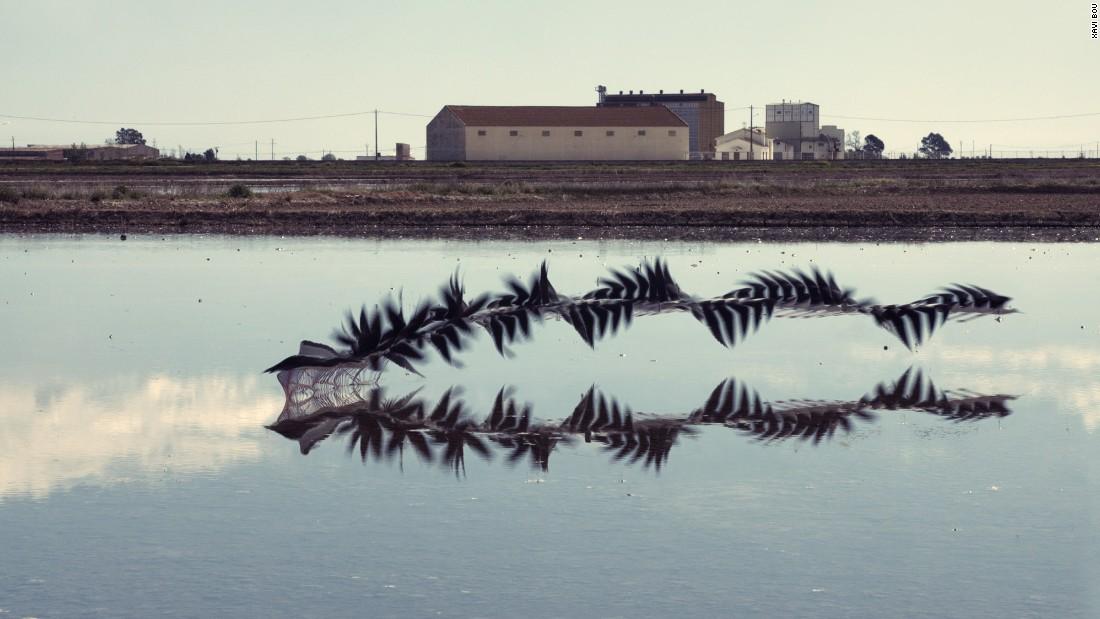 Ornitographie 17#: Himantopus himantopus, black-winged stilt, Ebro delta, Catalonia