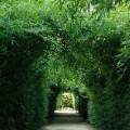 Labirinto della Masone 2