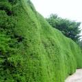 Ashcombe Maze 2