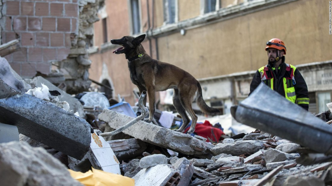 A dog searches for people trapped in collapsed buildings in Amatrice.