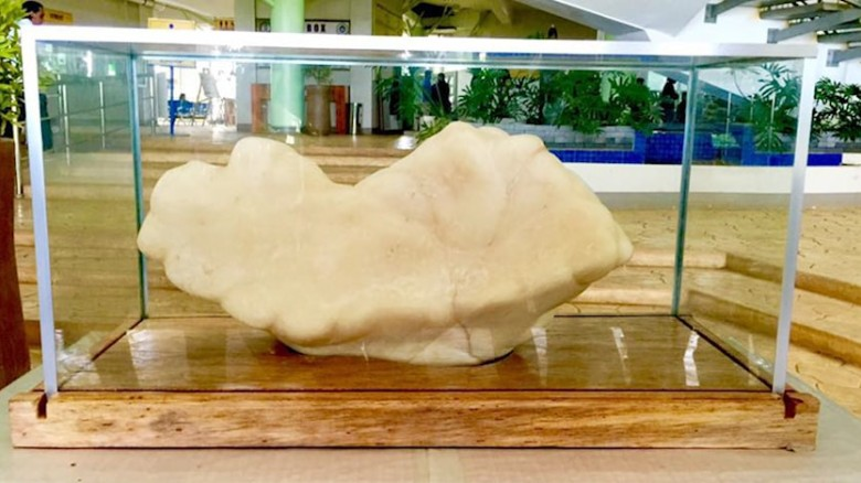 Largest pearl ever allegedly discovered