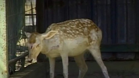 gaza zoo forced to close ian lee pkg_00000104