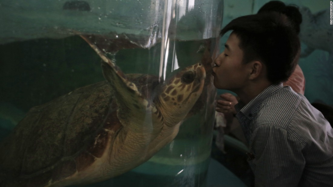 A North Korean man kisses a turtle through the glass of its tank at the newly opened Pyongyang Central Zoo in North Korea.
