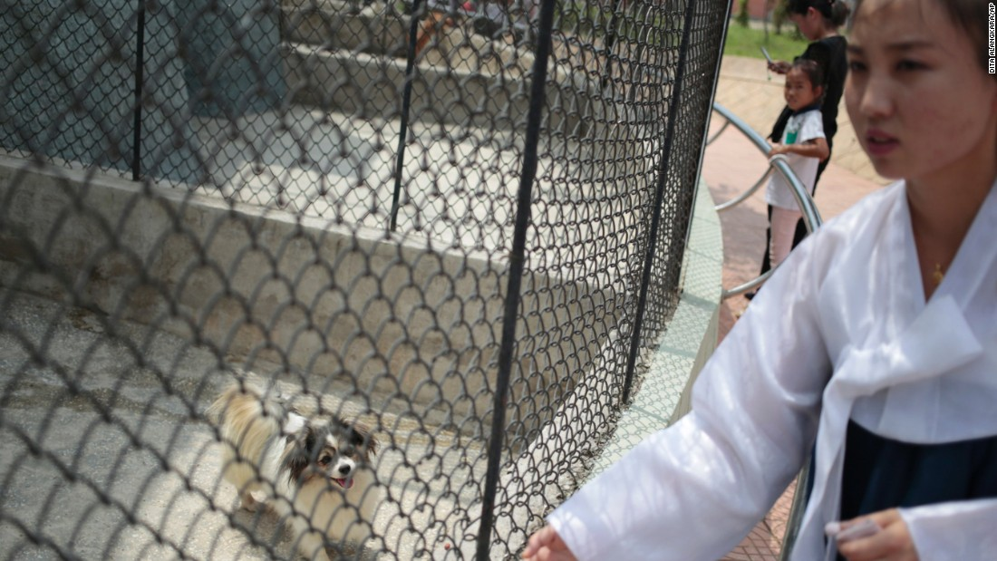One of the most popular attractions at the North Korean zoo might come as a surprise to foreign visitors: a 'dog pavilion.'