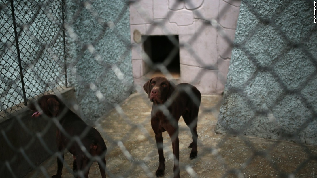 Dogs look out from inside a pen at Pyongyang's new zoo in North Korea.