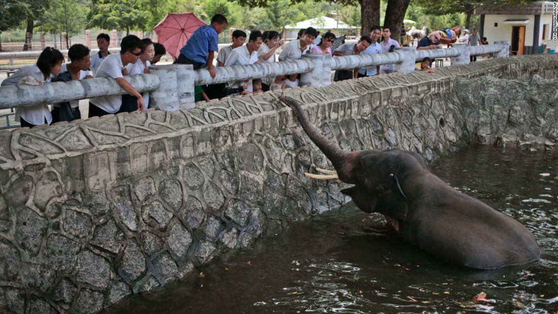 North Koreans feed an elephant at their new zoo.