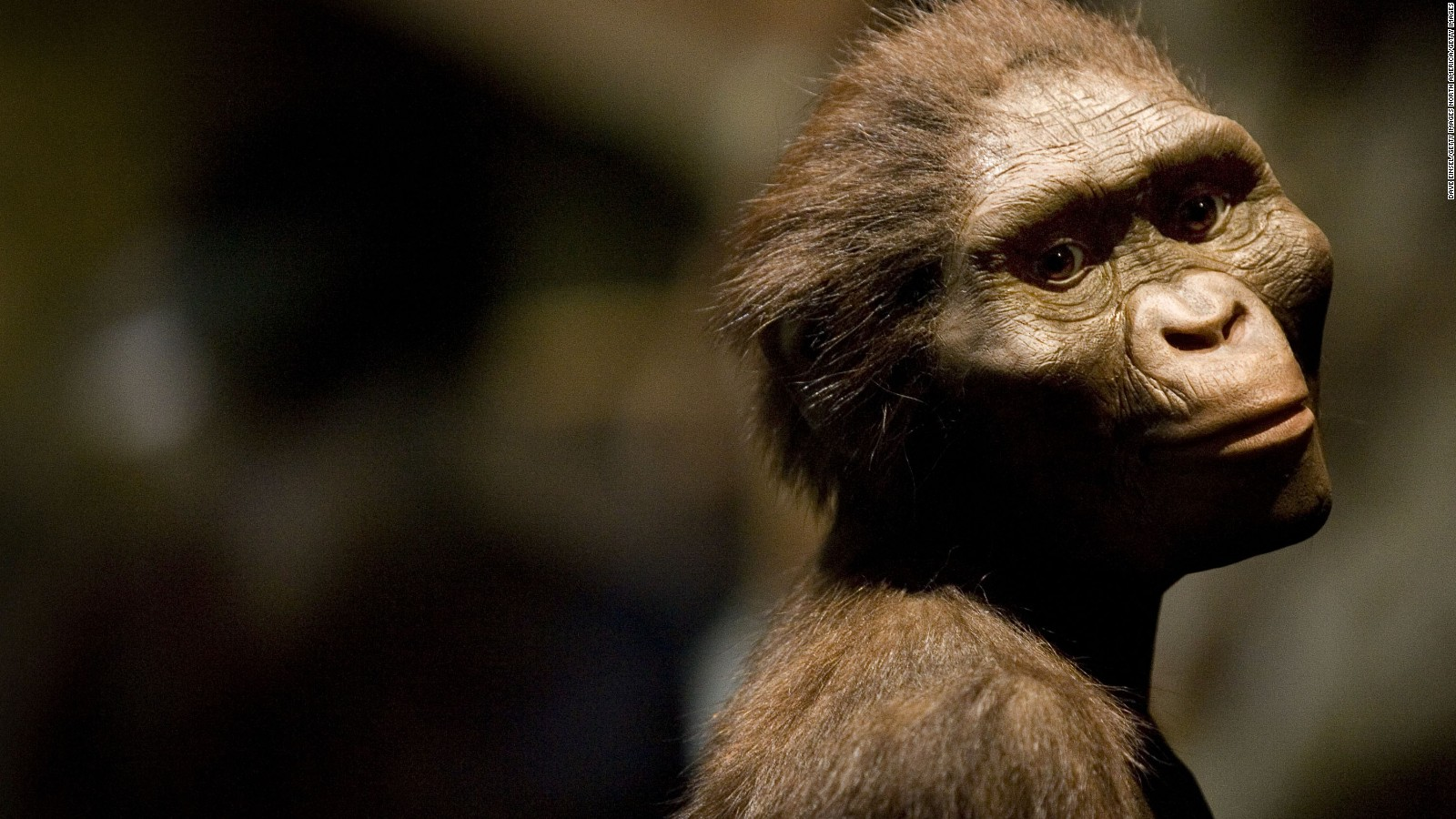 how did lucy our early human ancestor die com