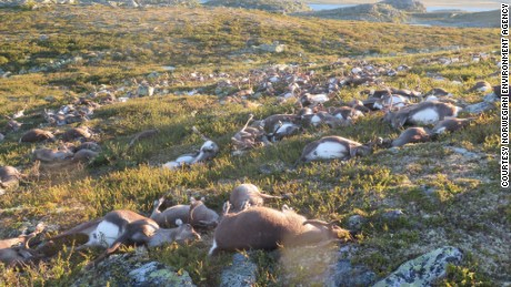 Reindeer carcasses were scattered across the remote area of Hardangervidda.