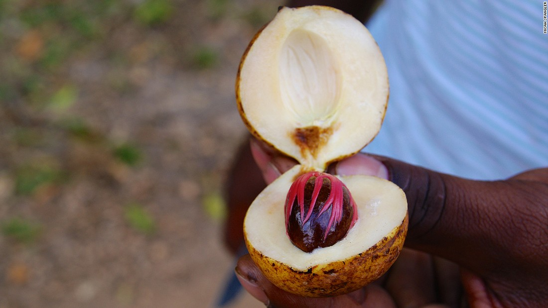 Zanzibar has a spice trade dating back to the 16th century, but today tourism is one of its main industries. Aben Rehan, from Mambo Poa Tours, cracks open a nutmeg seed.