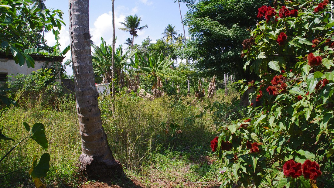 "Hakuna Matata Spice Farm, named for the Swahili phrase meaning ""no worries,"" made famous by Disney's ""The Lion King,"" is in Dole village, northeast of Zanzibar City."