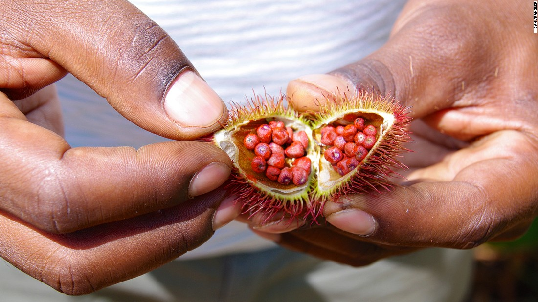 Achiote is sometimes known as the lipstick tree, as the tiny waxy seeds were traditionally used to make body paint and to redden lips.