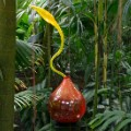 06 botanic garden art shows