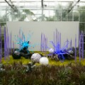 08 botanic garden art shows