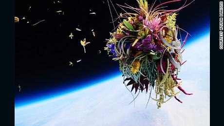 """Azuma sent a bonsai and a bouquet into space to create """"Exobiotanica"""""""