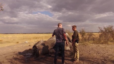 CNN's David McKenzie speaks with an official at the site of an elephant slaughter.