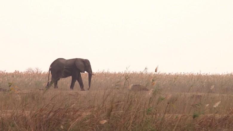 africa great elephant census mckenzie pkg_00020726