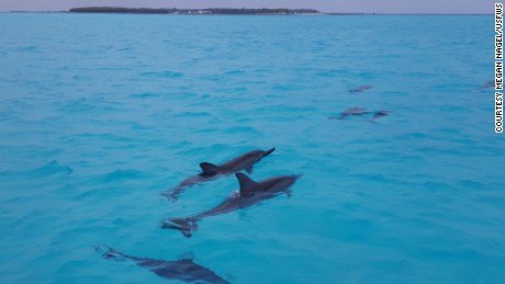 Dolphins swim in the waters off Sand Island on Midway Atoll.