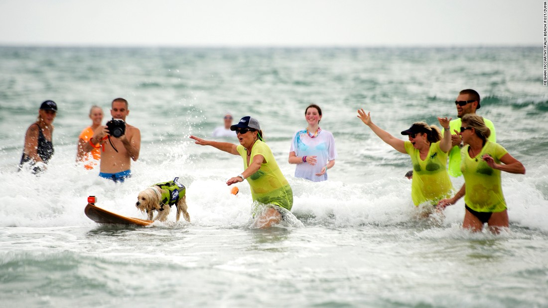 A dog named Waldo competes in a dog surfing contest held Saturday, August 27, in Jupiter, Florida.