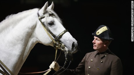 A white Lipizzaner stallion of The Spanish Riding School of Vienna