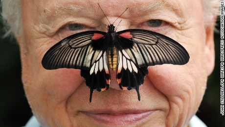 Attenborough posing with a southeast Asian Great Mormon Butterfly, at the London Zoo in 2012.