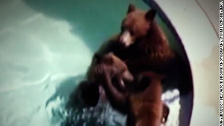cnnee vo rec osos en la alberca _00001201