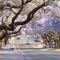 Pretoria jacaranda-trees
