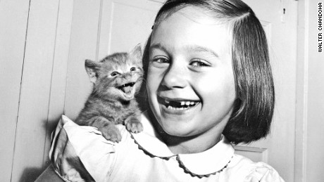 Walter Chandoha has been taking cute cat photos before the internet was invented