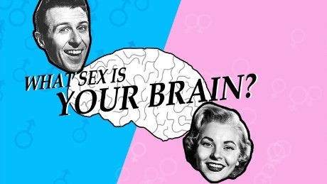The opening page of the brain gender quiz
