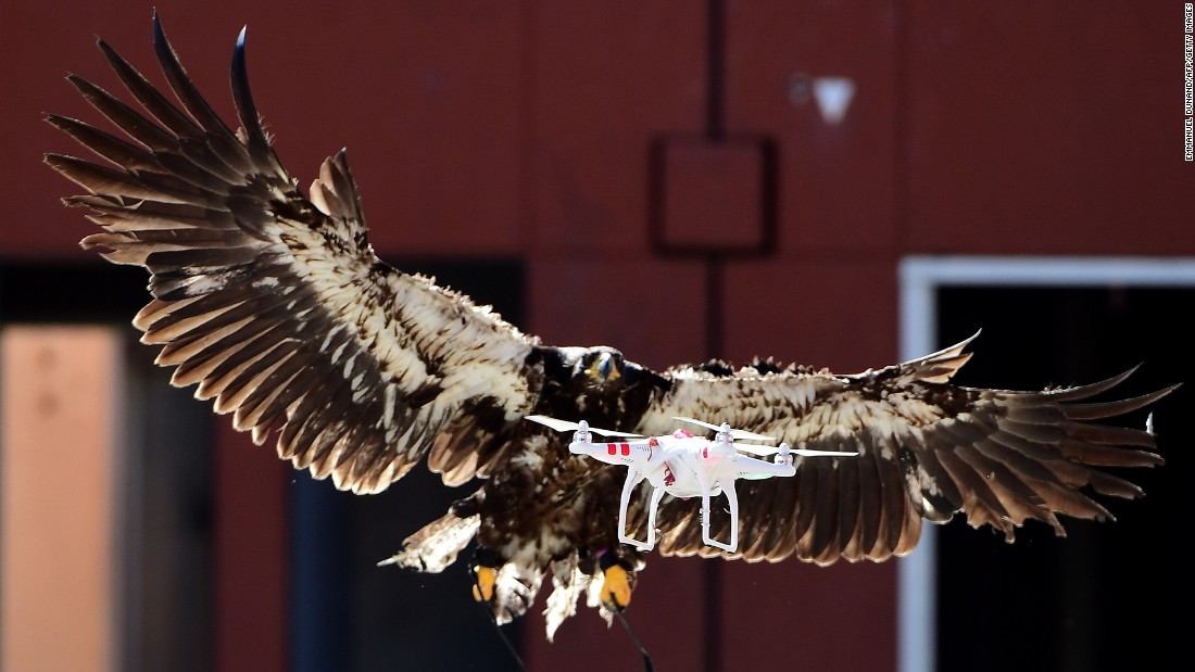A trained eagle attempts to catch a drone during a demonstration organized by Dutch police in Ossendrecht on Monday, September 12.