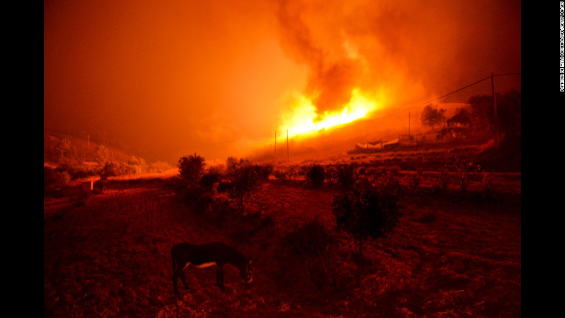 A donkey is seen as a wildfire burns in Algarve, Portugal, on Friday, September 9.