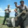 rhino dehorning 10