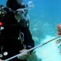 diver lionfish