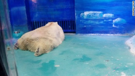Pizza the polar bear's conditions have been criticized in Chinese state media.