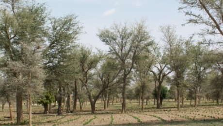 The effects of farmer managed natural regreening in Niger.