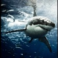 michael muller sharks photography 1