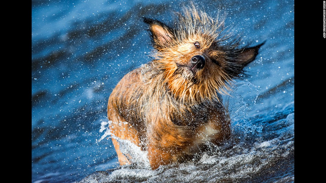 A dog named Frida shakes off some water as she comes out of the sea in Timmendorf, Germany, on Friday, September 23.