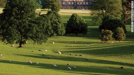 Highclere Castle is home to many animals including sheep, red deer and seven labradors.