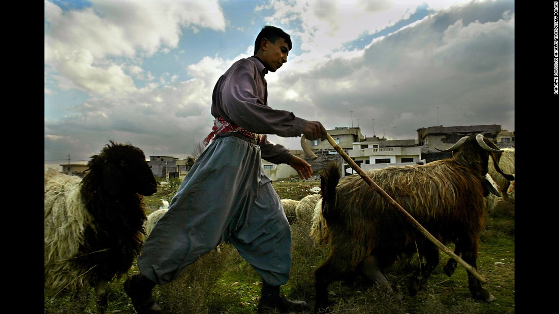 A teenage boy tends to a herd of sheep on the outskirts of Mosul in 2003.