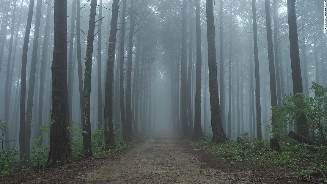Downpours shroud the forests and surrounding terrain in a misty veil, giving the Choishimichi Trail a delightfully eerie vibe.