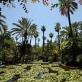 jardin majorelle ysl 12