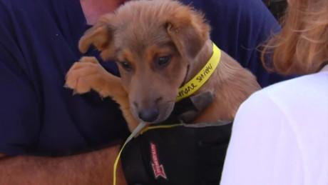 cnnee digital rescate perros carniceria_00000127