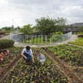 Farming Kindergarten 4