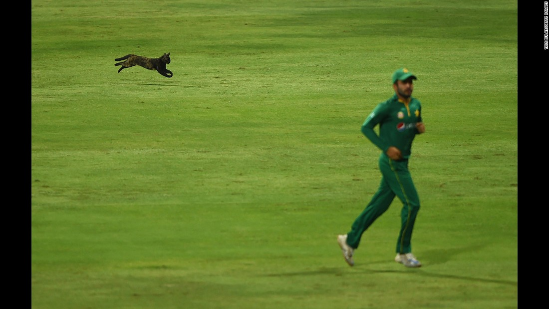 A cat enters the field of play during a cricket match between Pakistan and the West Indies on Wednesday, October 5. The match was played in Abu Dhabi, United Arab Emirates.
