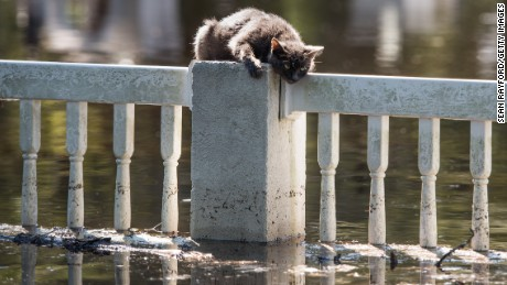 A cat is stranded on a fence in Fair Bluff.