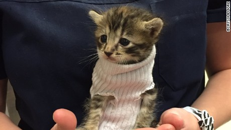 This rescued kitty in a sock sweater will melt your heart