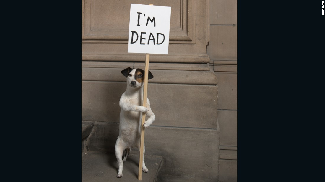 """I'm Dead"" (2010), taxidermy puppy with wooden sign and acrylic paint.<br />"