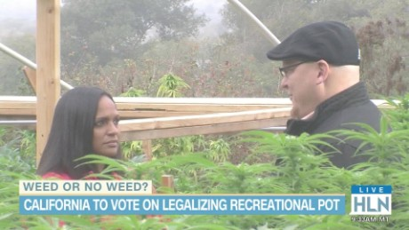 hln michaela california pot legalization prop 64_00010015