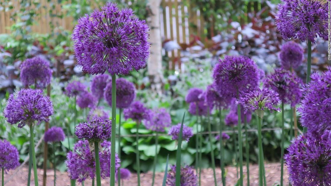 Dalstoni aed