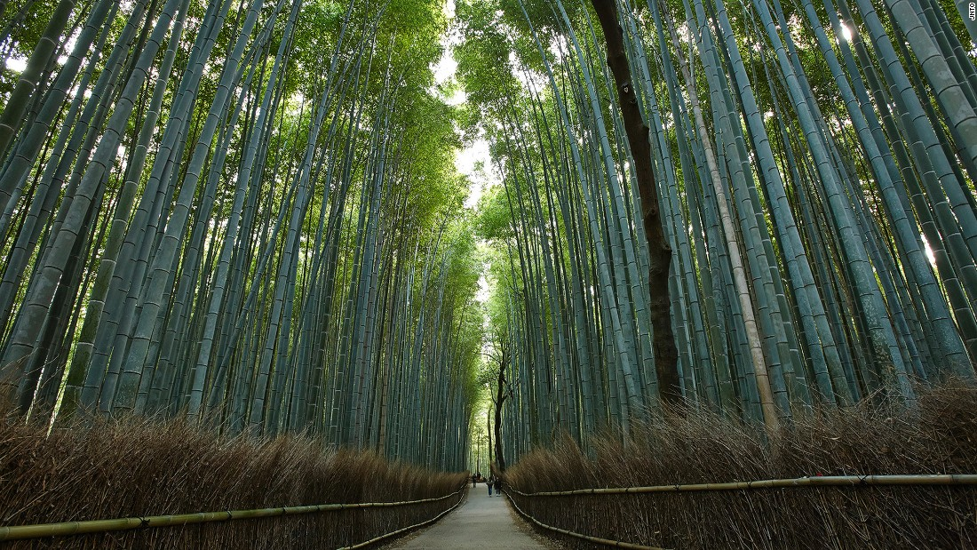 "<a href=""http://www.cnn.com/2014/08/11/travel/sagano-bamboo-forest/"">Sagano Bamboo Forest</a> is located in the gorgeous Arashiyama district of western Kyoto. For the best experience, head out early in the morning or late evening and avoid weekends completely, when Japanese day-trippers descend on the area."