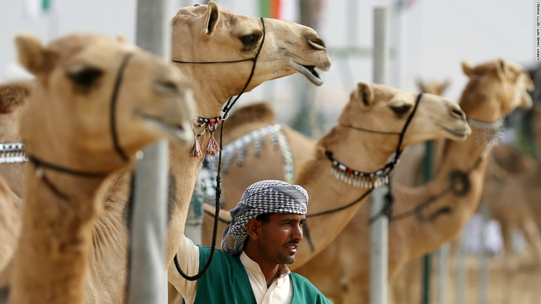 Not far from the oasis is Al Ain's buzzing camel market -- one of the last of its kind. Visitors can walk among the traders and get close to the animals.